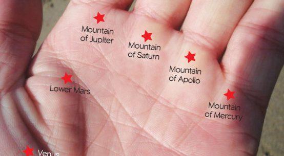 手のひらの「ふくらみ」から人の性質を読む