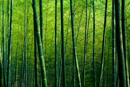 BambooField
