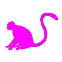 monkey2017