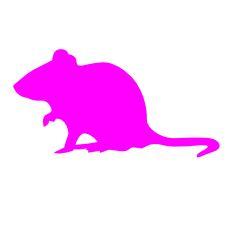 rat2017