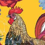 rooster2017_2