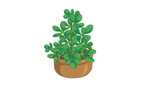 風水の良い植物