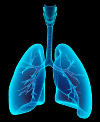 肺のレントゲン画像