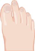人差し指が長い