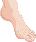 骨ばった足