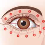 目の部位があらわす性格と運気